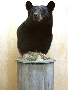 Black Bear Pedestal Mounts