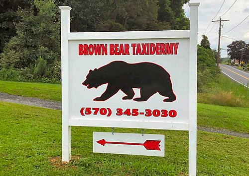 Brown Bear Taxidermy Studio 289 Pleasant Valley Rd. (Route 443) Pine Grove Pennsylvania 17963